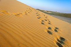 Landschap van de Indische Woestijn van Thar met exemplaarruimte Stock Fotografie