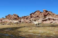 Landschap van de Laguna Negra Zwarte Lagune, Altiplano, Bolivië royalty-vrije stock afbeelding