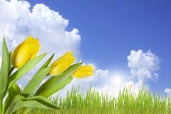 Landschap van de lentebloemen op blauwe hemel Stock Afbeeldingen