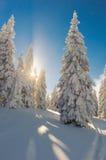 Landschap van de mooie sneeuwwinter Royalty-vrije Stock Afbeelding