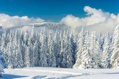 Landschap van de mooie sneeuwwinter Stock Foto's
