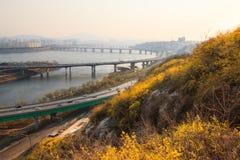 Landschap van de Stad van Seoel met forsythiabloem Stock Fotografie