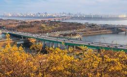 Landschap van de Stad van Seoel met forsythiabloem Stock Foto