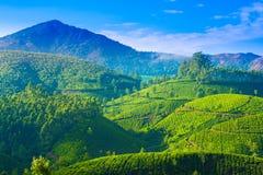landschap van de theeaanplantingen in India, Kerala, Mun Stock Foto's