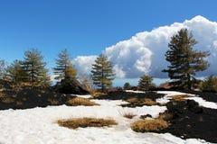 Landschap van de vulkaan van Etna, het hout van de larikspijnboom Royalty-vrije Stock Fotografie