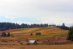 Landschap van de Wijngaard van de Herfst Stock Afbeeldingen