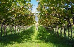 Landschap van de wijngaarden van Trentino Alto Adige in Italië De wijnroute Stock Afbeelding