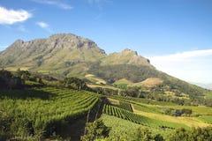 Landschap van de wijnmakerijen in Zuid-Afrika stock afbeeldingen
