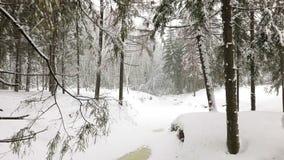 Landschap van de winterbos stock footage