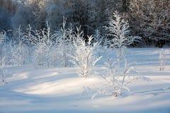 Landschap van de winterhout Stock Foto