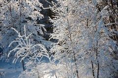Landschap van de winterhout Royalty-vrije Stock Foto's