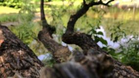 Landschap van een boom over een meer stock video