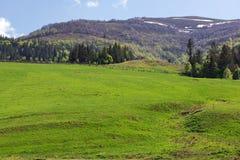 Landschap van een grasrijke vallei en bergen met bomen Royalty-vrije Stock Foto