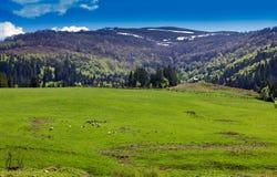 Landschap van een grasrijke vallei en bergen met bomen Royalty-vrije Stock Fotografie