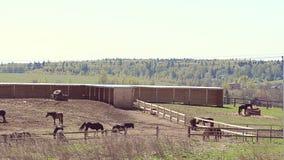 Landschap van een landbouwbedrijf stock footage