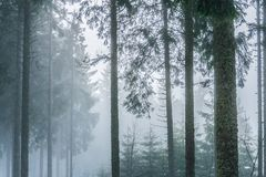 Landschap van een nevelig en somber bos stock afbeelding