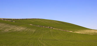 Landschap van een weide Stock Fotografie