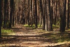 Landschap van flora Gang in het bos met bomen en sunligh royalty-vrije stock foto's