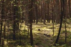 Landschap van flora met bomen in het bos en het zonlicht stock fotografie