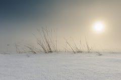 Landschap van gebied met wat die gras door sneeuw wordt behandeld Stock Foto