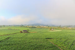 Landschap van graangebieden Royalty-vrije Stock Foto's