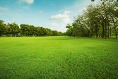 Landschap van grasgebied en het groene gebruik a van het milieu openbare park Stock Foto's