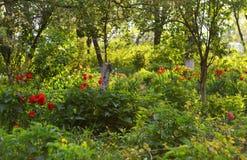 Landschap van groen en tulpen royalty-vrije stock foto's