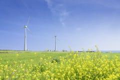 Landschap van groen gerstgebied en gele canolabloemen Royalty-vrije Stock Afbeelding