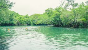 Landschap van groen water en bos rond Formoso-rivier in Boni Royalty-vrije Stock Foto