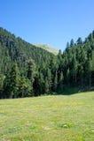 Landschap van het bos in de bergen van de Pyreneeën Royalty-vrije Stock Foto