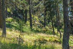 Landschap van het bos van de Pyreneeën Stock Fotografie
