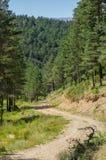 Landschap van het bos van de Pyreneeën Royalty-vrije Stock Fotografie