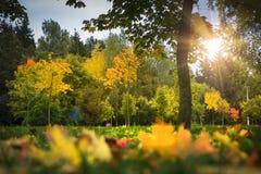 Landschap van het de herfstpark Multicolored gele en rode bladeren op gras, bomen en zonlicht Daling De achtergrond van de herfst Stock Afbeelding