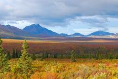 Landschap van het Denali het Nationale Park royalty-vrije stock foto