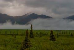 Landschap van het Denali het Nationale Park royalty-vrije stock foto's