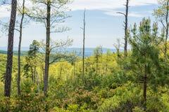 Landschap van het gebied rond Lang Pijnboomreservoir in Michaux Stat royalty-vrije stock fotografie