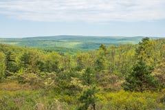 Landschap van het gebied rond Lang Pijnboomreservoir in Michaux Stat stock fotografie