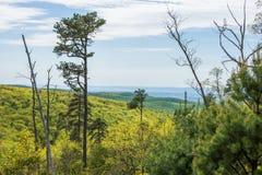 Landschap van het gebied rond Lang Pijnboomreservoir in Michaux Stat stock foto's
