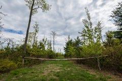 Landschap van het gebied rond Lang Pijnboomreservoir in Michaux Stat royalty-vrije stock afbeelding