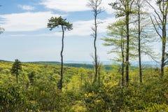 Landschap van het gebied rond Lang Pijnboomreservoir in Michaux Stat stock foto