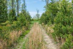 Landschap van het gebied rond Lang Pijnboomreservoir in Michaux Stat royalty-vrije stock foto's