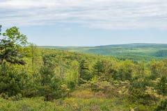 Landschap van het gebied rond Lang Pijnboomreservoir in Michaux Stat stock afbeeldingen