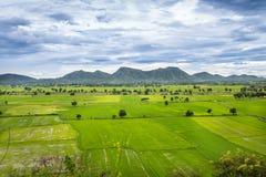 Landschap van het groene gebied van de jasmijnrijst met berg en wolkenhemelachtergrond Stock Foto's