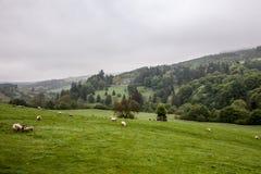 Landschap van het hoogland van Schotland Stock Afbeelding