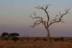 Landschap van het Kruger het Nationale Park Royalty-vrije Stock Foto's
