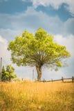Landschap van het land in het gebied van Transsylvanië Stock Afbeeldingen