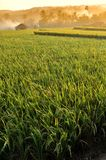 Landschap 02 van het landbouwpadieveld stock fotografie