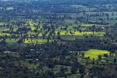 Landschap van het oogmening van de padieveldenvogel Royalty-vrije Stock Foto