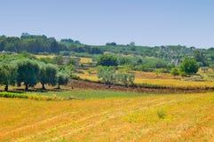 Landschap van het platteland van Martina Franca (Ta Stock Afbeeldingen