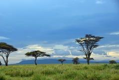 Landschap van het Serengeti het nationale park, Tanzania, Afrika stock afbeelding